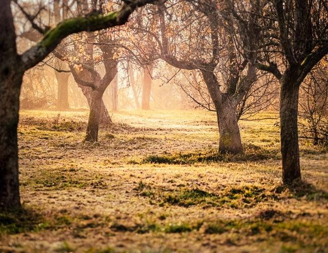 beautiful-old-trees