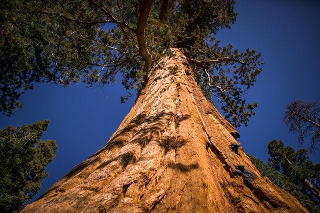 beautiful-old-tree