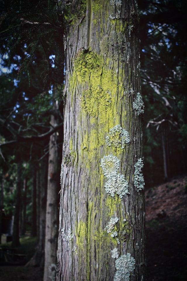 bark-of-beautiful-old-trees