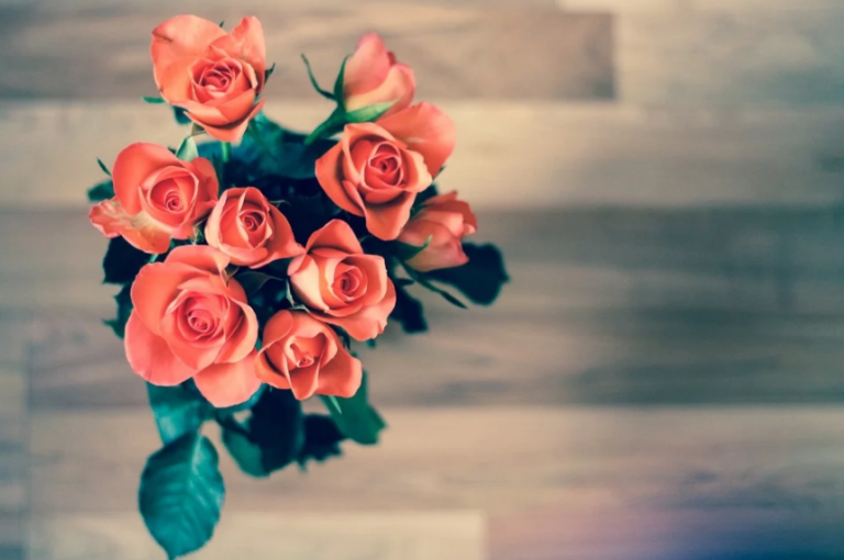 How to Keep Roses Healthy